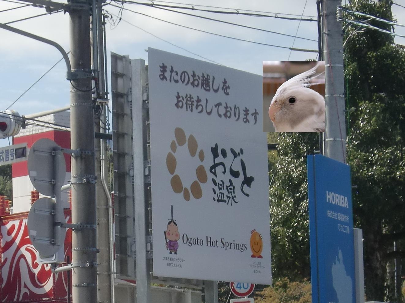 Ogoto_okame